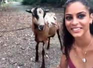 Intenta hacerse un selfie con una cabra. Sale
