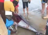 Aparece un atún muerto en La Manga y comienzan a cortarlo para