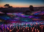 «Το λιβάδι του φωτός»: Μια φαντασμαγορική εγκατάσταση 58.000 LED στην