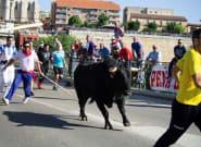 Tordesillas (Valladolid) celebra este martes el Toro de la Vega, sin muerte por cuarto año