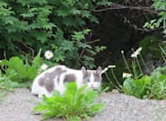 Cats Abandoned On Little Bay Island, Newfoundland After All Its Residents