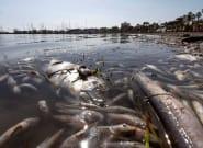 El 80% de la flora y fauna del Mar Menor muere tras la gota