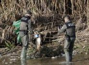 Emergencia ambiental en el río Besòs: numerosos peces muertos tras el incendio en una planta de