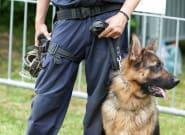 Una exhibición de perros policía en un instituto acaba con una incautación de droga y tres alumnos