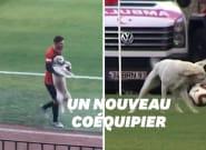 Ce chien a débarqué en plein match de foot et il avait très envie de