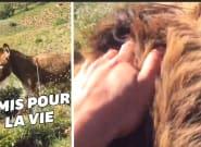 Au déconfinement en Espagne, il retrouve son âne et ne peut retenir ses