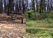 Un 'time-lapse' muestra cómo se recupera la naturaleza de los incendios de
