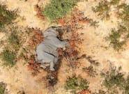 Botsuana investiga la misteriosa muerte de 275 elefantes en los últimos