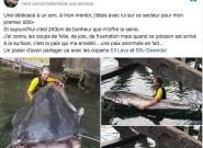 Pesca un pez descomunal en el río Sena