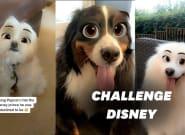 Sur TikTok, ils transforment leurs chiens en personnages