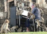 Un pianista británico toca un concierto para unos monos en