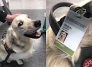 Aux États-Unis, un hôpital embauche un chien pour remonter le moral des