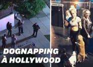 Deux chiens de Lady Gaga volés à Hollywood, leur gardien blessé par