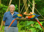David Attenborough's Life In Colour Fulfils The Broadcaster's Lifelong