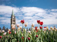 Canadians Can Expect A Mild Spring Across The Country: Weather