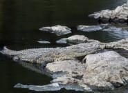 En Afrique du Sud, la police sur les traces d'une bande de crocodiles
