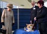 Elizabeth II adopte deux corgis réputés pour leur