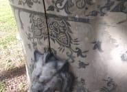 Το χαμένο κασπώ των ανακτορικών κήπων στο Τατόι εντοπίστηκε στο Προεδρικό