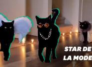 Les défilés de mode de ce chat sont dignes de la Fashion