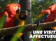 Ce perroquet sauvage rend visite tous les jours à son Roméo du zoo de