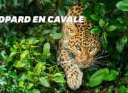 En Chine, course poursuite avec un léopard échappé d'un
