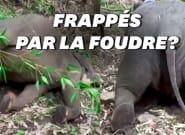 En Inde, au moins 18 éléphants retrouvés morts, a priori tués par la