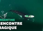 La vidéo spectaculaire d'une baleine jouant avec un