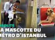 À Istanbul, ce chien errant est la star des transports en