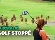 En Australie, une bande de kangourous envahit un parcours de