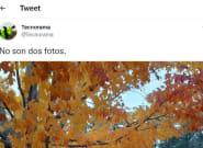 La increíble ilusión óptica que vuelve loco a Twitter: tendrás que mirar dos veces para