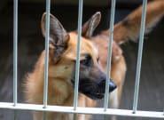 Emocionante: decenas de personas acogen a los perros de una protectora de Valencia inundada por las
