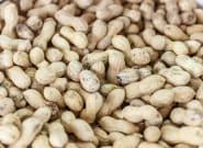 Peanut Allergy Treatment Safe For Use On Children, Study