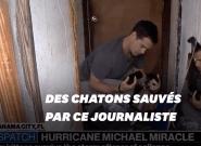 Blessés dans l'ouragan Michael, ces chatons sont secourus par un