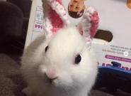 La tierna historia de Mimi, el conejo que nació sin orejas y las lleva de