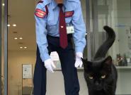 Au japon, deux chats tentent d'entrer dans un musée tous les jours depuis deux