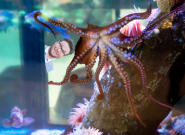 Vancouver Aquarium Names Newest Octopus After Seth