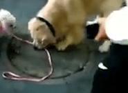 Ce chien cleptomane a tenté de voler un autre