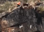 El espantoso vídeo de un cacería en la que varios animales caen al vacío que horroriza en