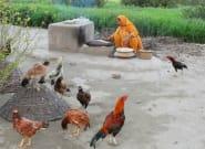 Pour sortir de la pauvreté, le Pakistan veut offrir... des