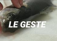 Le poisson ikejime, la technique ancestrale venue du