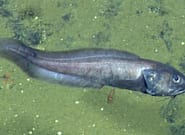 Ces poissons prospèrent dans un environnement