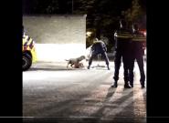 Así tranquiliza la policía holandesa a un perro que protege a su dueña y las redes lo comparan con el caso de