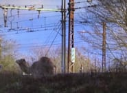 La ligne R du Transilien perturbée par un