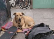 El ayuntamiento de Barcelona determina que la actuación del policía que mató a tiros a la perra Sota fue