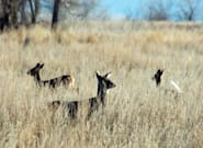 'Zombie Deer Disease': What You Should Know About The