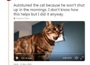 Il a autotuné son chat et c'est