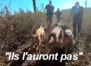 Rémi Gaillard en appelle à Macron après la diffusion d'une vidéo de chasse à