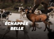 Si la mère de Bambi avait été en zone habitée, elle ne serait pas