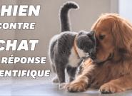 Vous préférez les chiens aux chats? Voilà