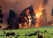 Se mantienen activos 37 incendios en una veintena de municipios de